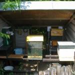honingkorven