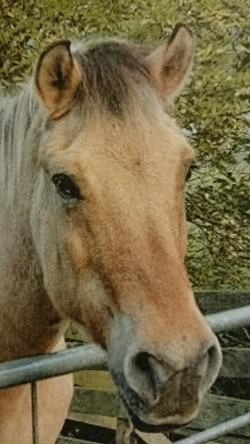 foto Casper het paard van Nelleke